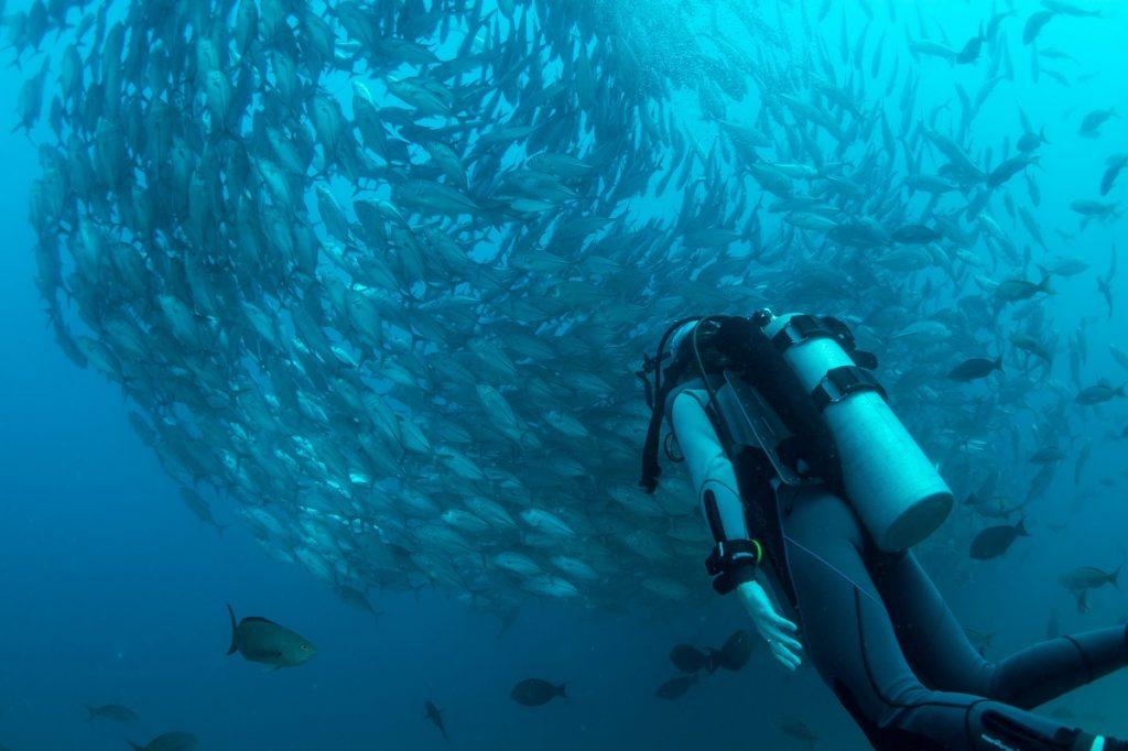 A Marine And Nature Sanctuary