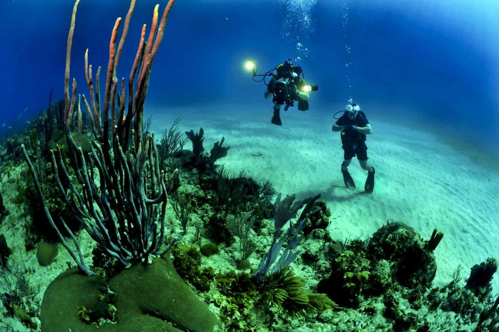 Swim Amidst Marine Life At Prime Diving Spots